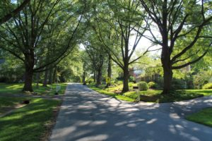 Tree lined street in Flower Valley great for walks and bike ride